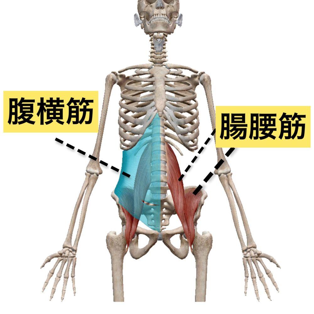 腸腰筋 腹横筋